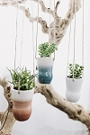 Color Washed Hanging Succulent Planter Assortment  (Pack 15)