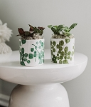 Botanical Print Succulent Planter (Pack 12)