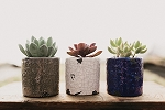 Distressed Dolomite Succulent Planter (Pack 15)