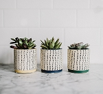 Dotted Succulent Planter (Pack 12)