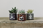 Halloween Ceramic Succulent Planter (Pack of 12)