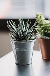Mini Tin Succulent Planter (Pack 18)